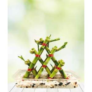 Three Layer Lucky Pyramid Bamboo